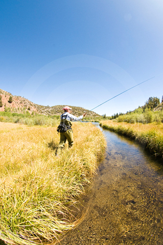 Fly-fishing a trout stream